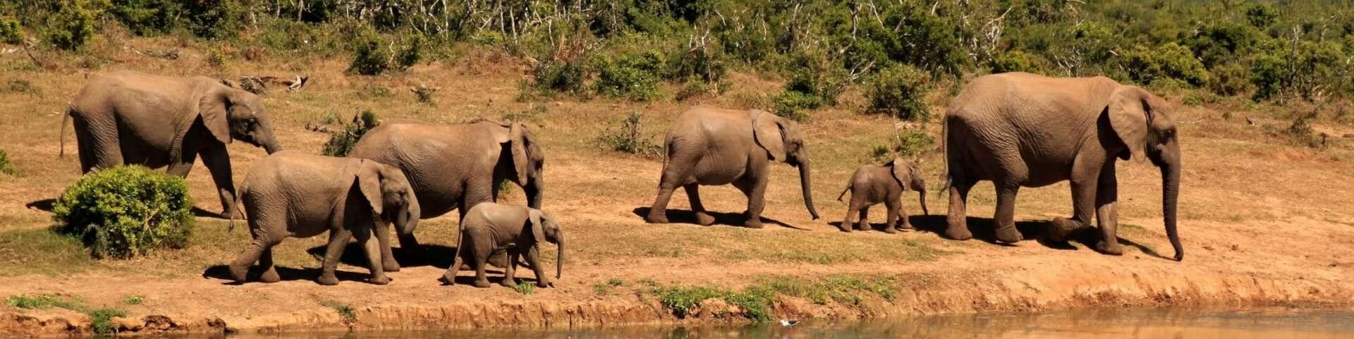 13 diersoorten die op uitsterven staan