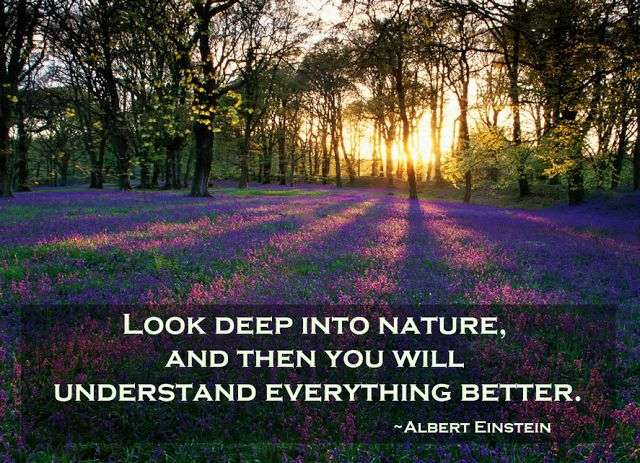 Albert Einstein Look deep into nature and then you will understand everything better