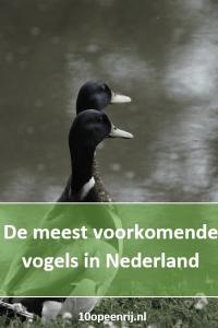 De meest voorkomende vogels in Nederland 🦆