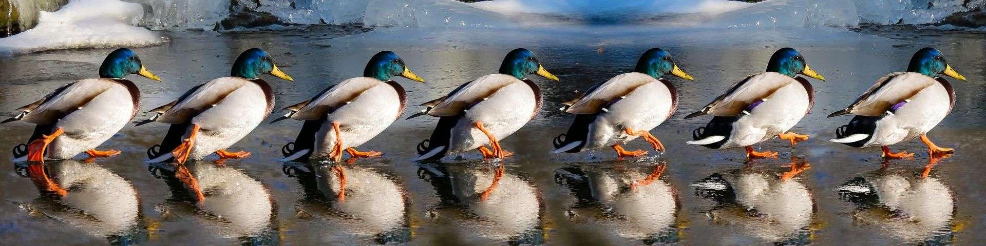 banner vogels in NL 2